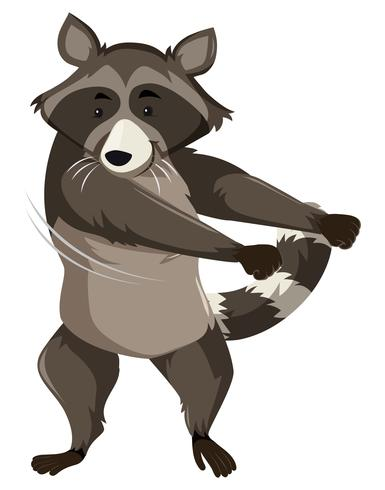 A raccoon doing floss dance