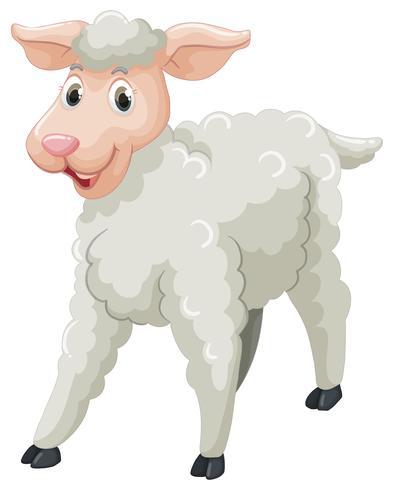 Ovelha branca com cara feliz