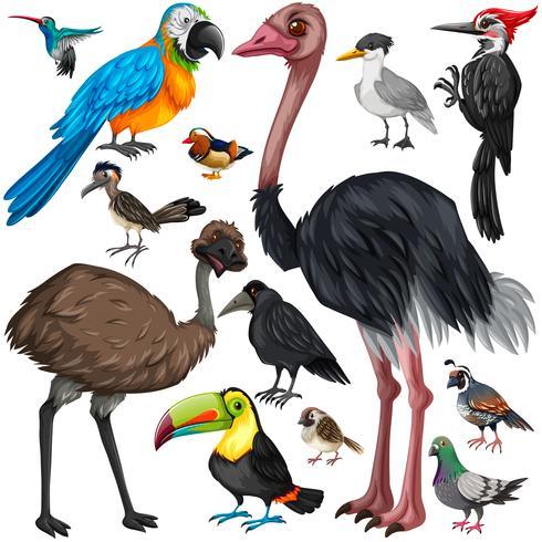 Different types of wild birds vector