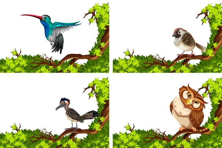 Verschillende wilde vogels op de tak vector