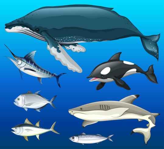 Diferentes tipos de peces bajo el mar. vector