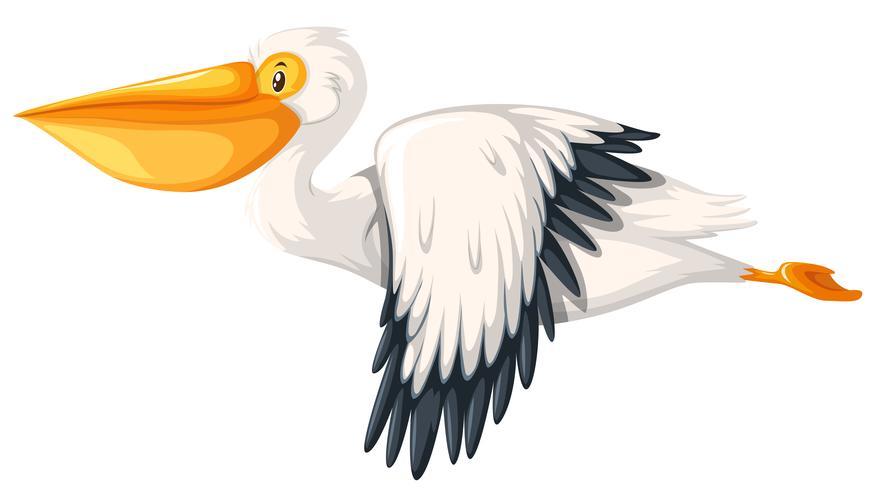 Pelikan, der weißen Hintergrund fliegt