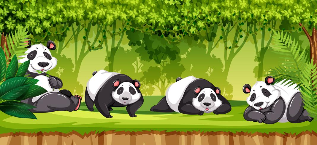 Set van panda's in de jungle