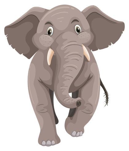 Elefantino con pelle grigia