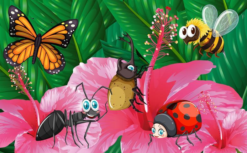 Verschillende soorten insecten in de tuin