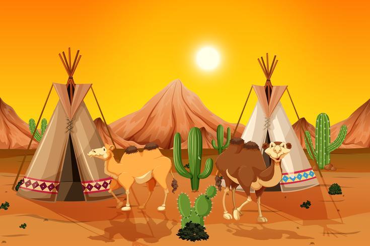 Kamelen en tipi in woestijn