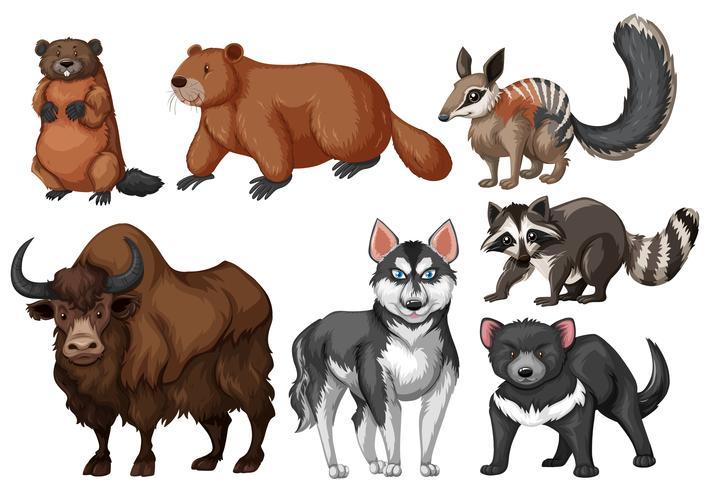 Many types of wild animals