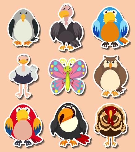 Design da etiqueta com diferentes tipos de aves