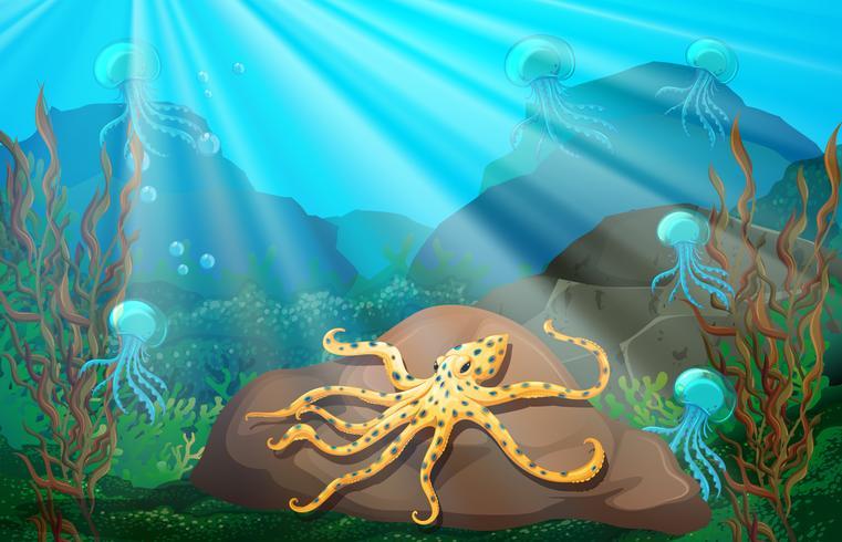 Scena subacquea con calamari su roccia
