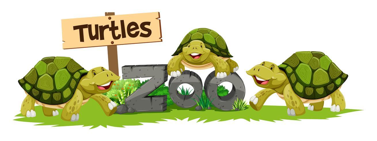 Tortues au zoo