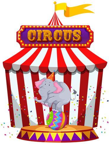 Elefante, executar, infront, de, um, barraca circo