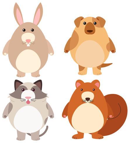 Cuatro tipos de mascotas lindas