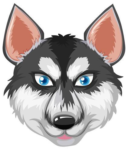Face of Siberian Husky