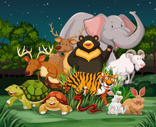 Diversi tipi di animali selvatici nel parco vettore