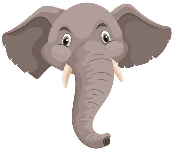 Isolerad elefant huvud vit bakgrund