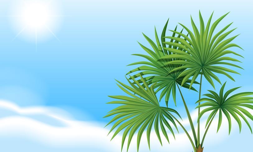 Een palmplant en een heldere blauwe lucht