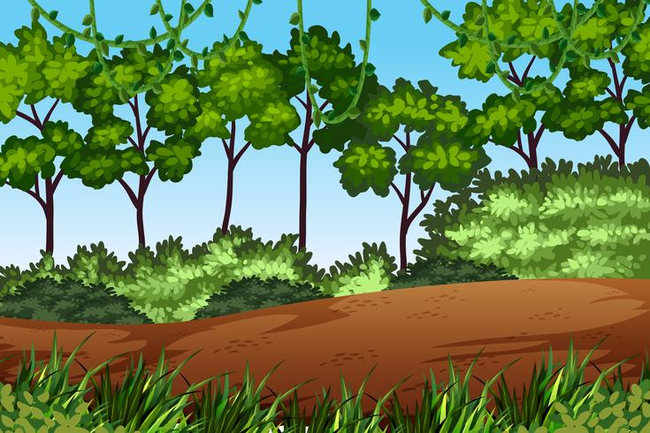 Grön skogs naturlandskap