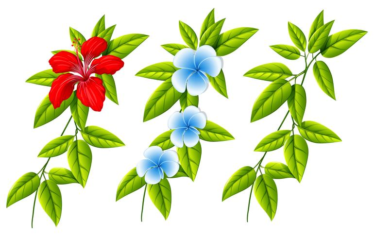 Set of different flowers and leaves