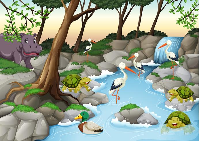 Cena de água com muitos animais selvagens