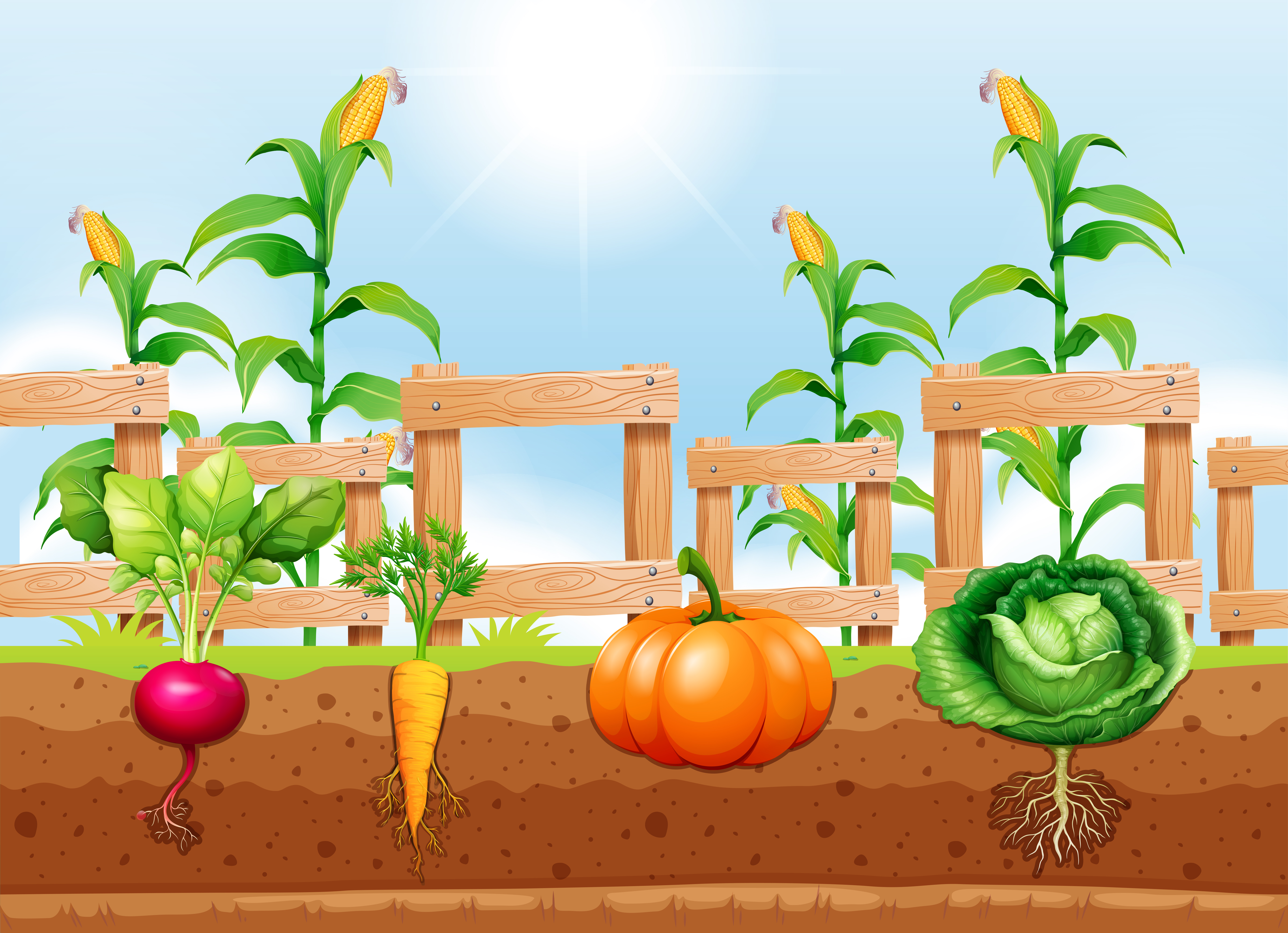 Agriculture Vegetables and Underground Root - Download ...