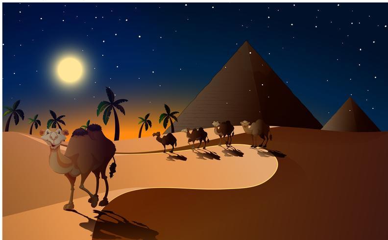 Camellos caminando en el desierto por la noche