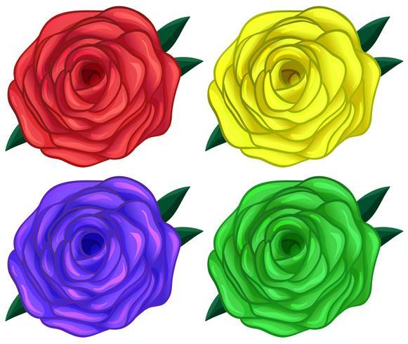 Fyra färgglada rosor