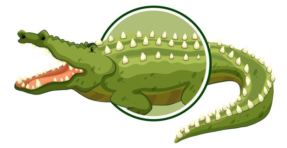 Um adesivo de crocodilo no fundo branco vetor