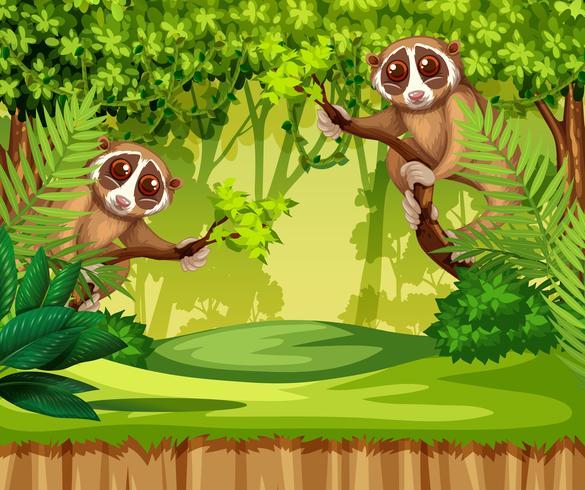 Tarsier viviendo en la jungla