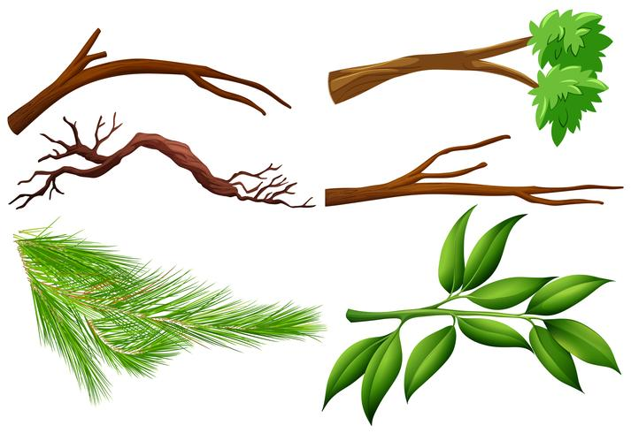 Um conjunto de galho de árvore