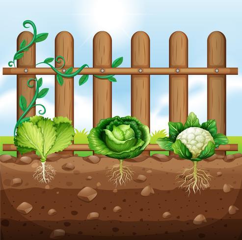 Set of vegetable crops