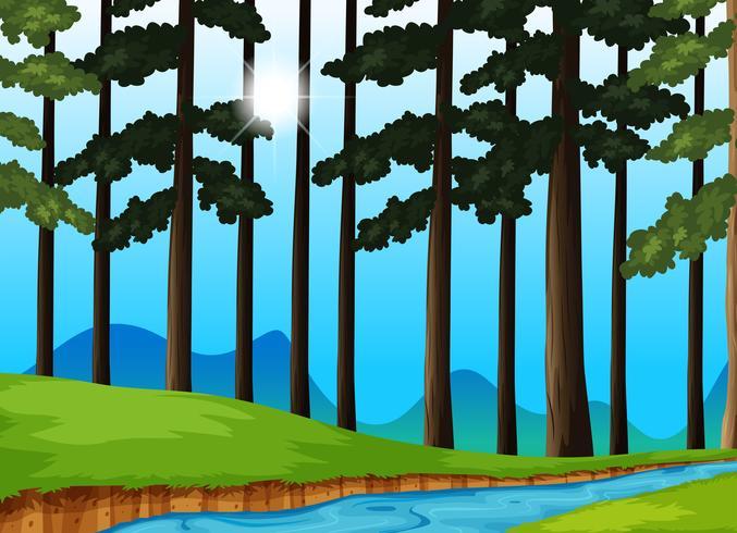 Arbres et rivière dans la forêt