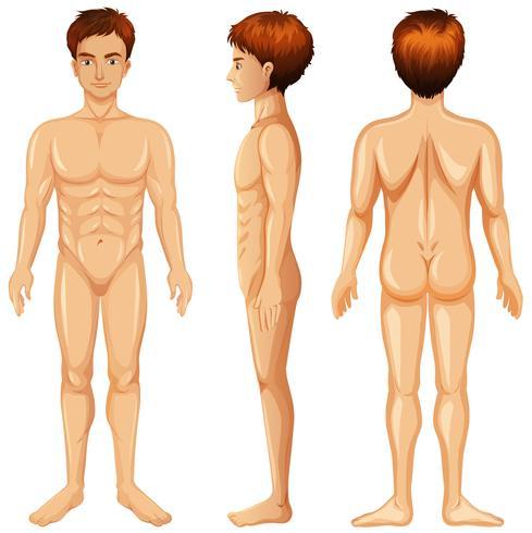 Parte anteriore e posteriore del corpo dell'uomo