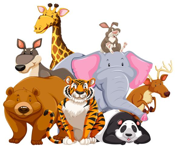 Animals characters on white