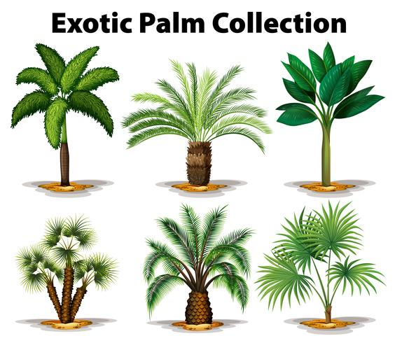 Different types of exotic palm trees