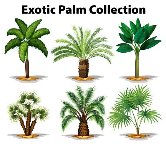 Olika typer av exotiska palmer vektor