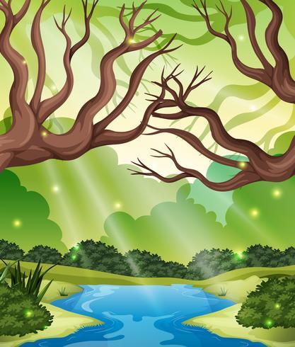 Uma paisagem florestal natural