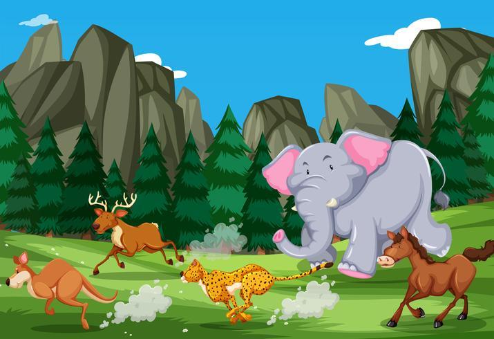 Gli animali corrono nella natura