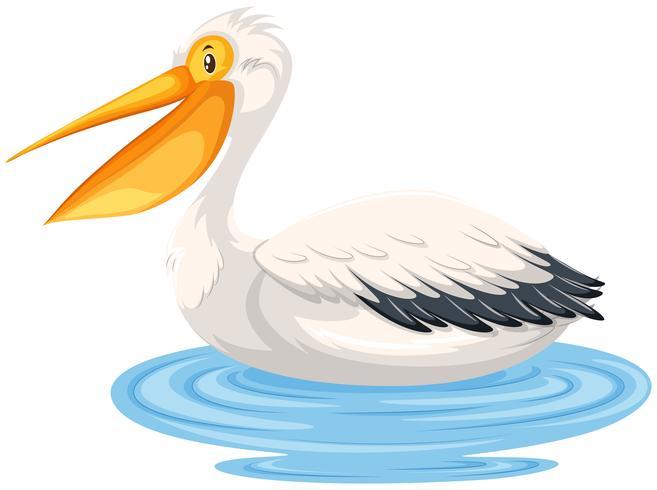 Um pelicano na água