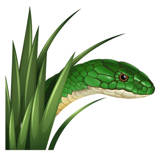 Green snake behind the grass
