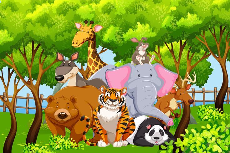 Animali selvaggi in natura