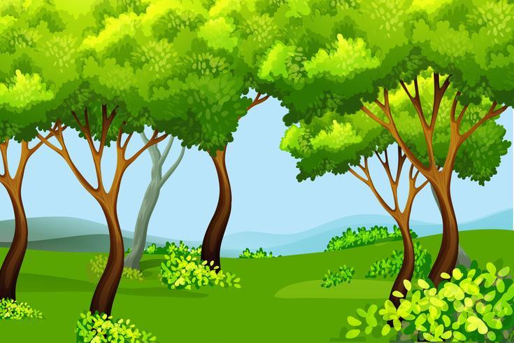 Paisaje de la naturaleza del bosque verde