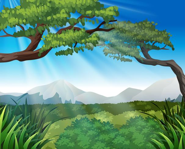 Nature scene with trees on mountains - Download Free Vector Art, Stock Graphics & Images