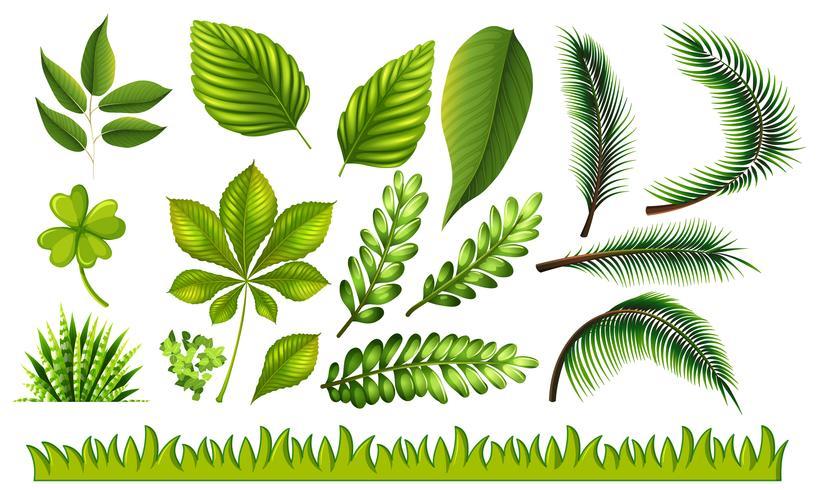 Diferentes tipos de hojas verdes y hierba. vector
