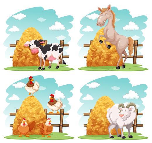 Animaux de la ferme à la ferme