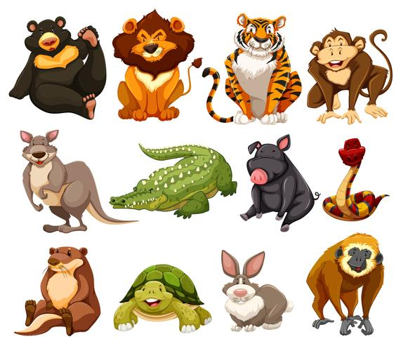 Different kinds of jungle animals vector