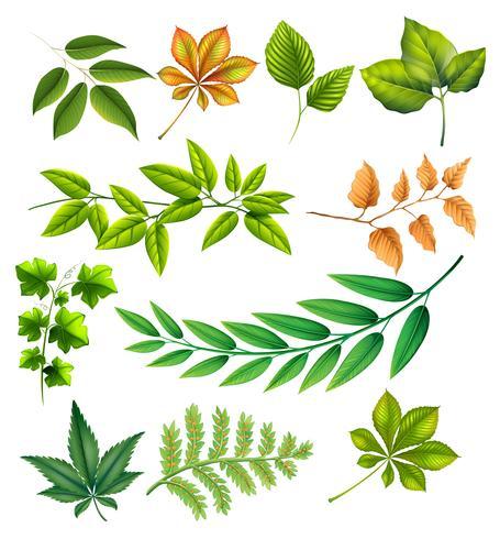 Diferentes hojas