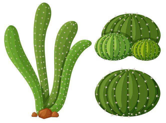 Tres tipos de plantas de cactus.