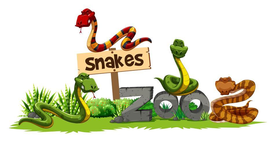 Quatro cobras no zoológico