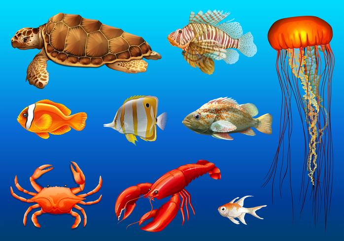 Olika typer av vilda djur under vattnet vektor