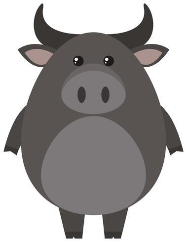 Gray buffalo on white background
